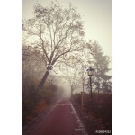 Misty morning in a city forest park with a red gravel footpath 64238