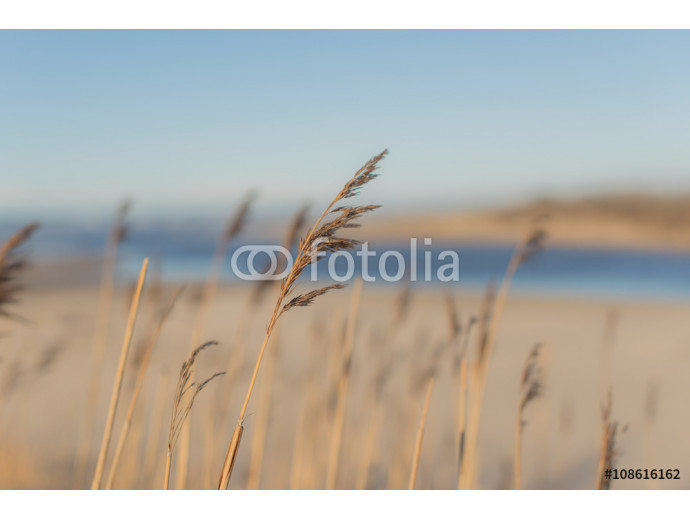 Reed Plants on the Beach 64238
