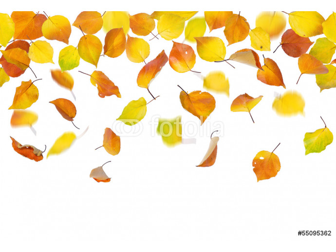 Wallpaper Seamless pattern of autumn leaves, falling on white background. 64238
