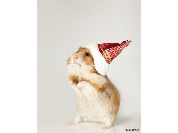 Hamster in christmas red hat 64238