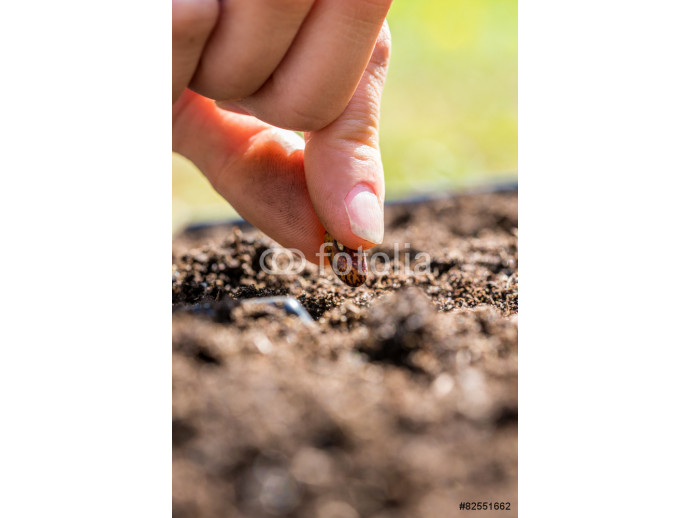 Fototapeta Person planting a seed in the ground 64238
