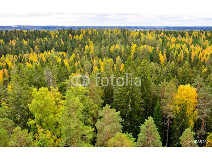 Autumn in forest 64238