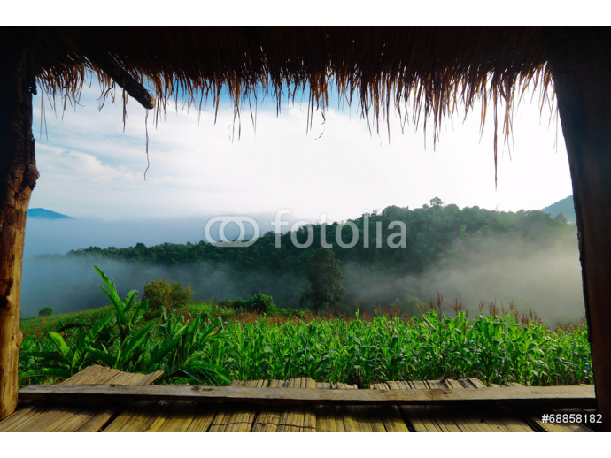 View from porch of bamboo hut on early morning 64238