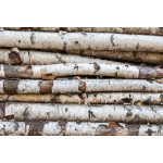 Background of the old birch logs 64238