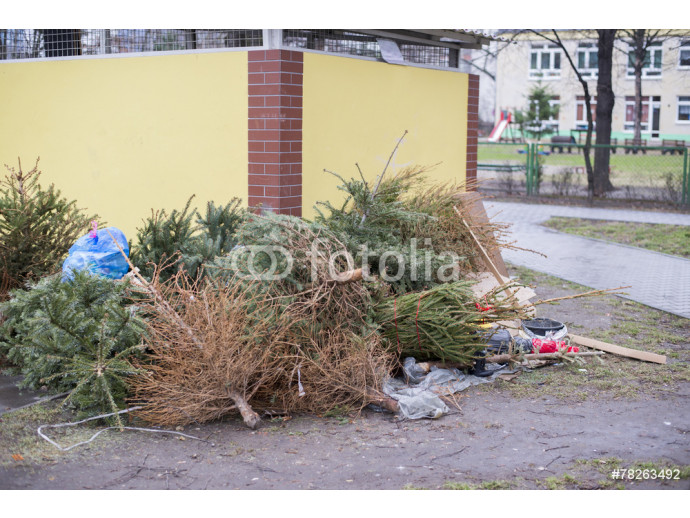 discarded Christmas trees, garbage after Christmas 64238