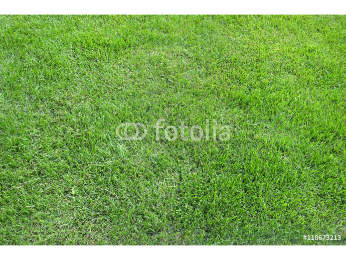 Fototapeta Mown natural green grass meadow as background in summer day close up horizontal view 64238