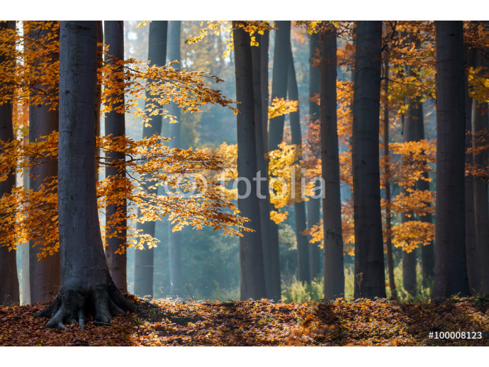 Fotomurale Autumn in the forest. 64238
