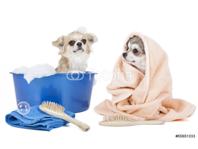 Wash the dogs 64238