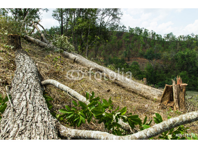 Slash and burn cultivation, rainforest cut and burned to plant c 64238