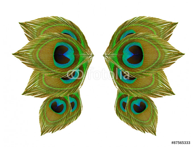 Wings peacock feathers on white background 64238