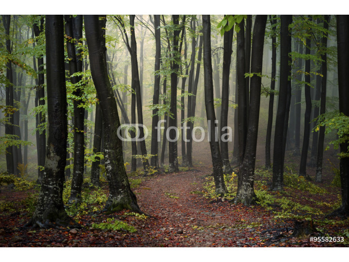 Trail in foggy forest during an autumn day 64238