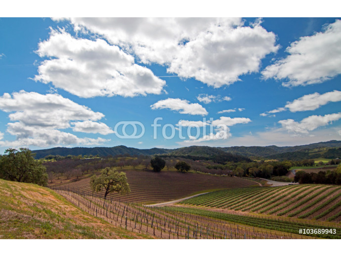 Paso Robles Central California Wine Country Scenery 64238