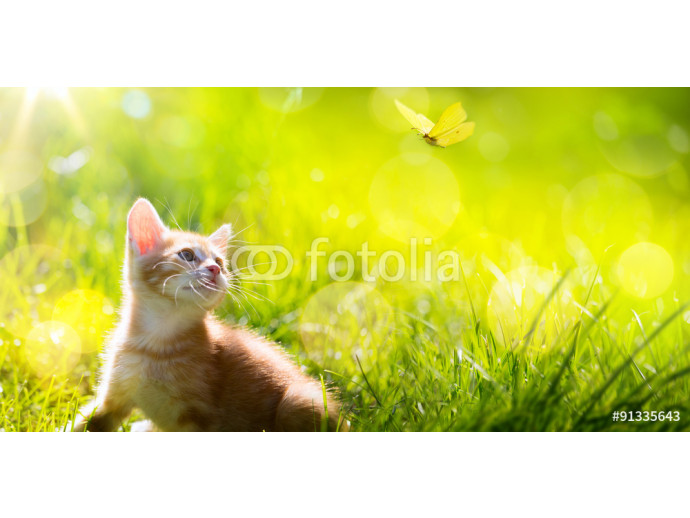 Art  little kitten  hunting a butterfly 64238