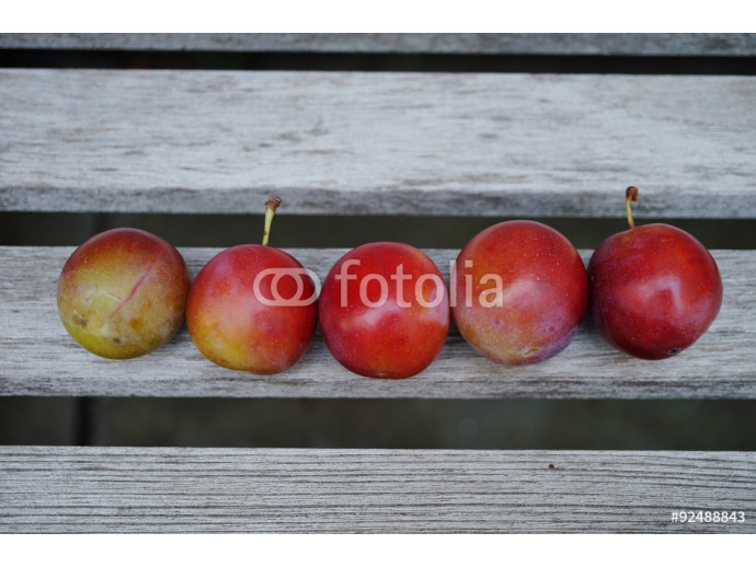 Five round red and yellow plums in a line 64238