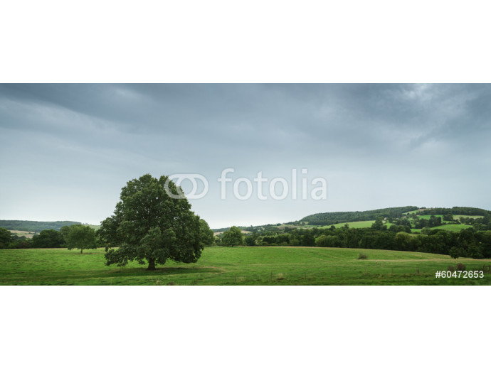 View of the countryside, England 64238