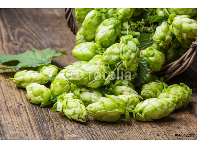 green hop cones on a wooden table 64238