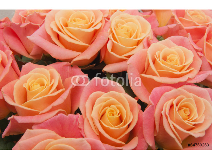 pink natural roses background 64238