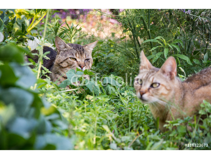 cats are playing in colorful garden. pets 64238