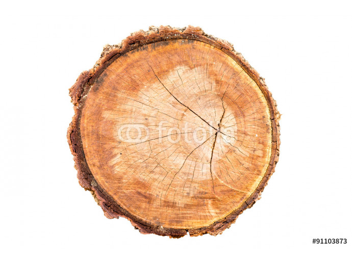 Top view of tree stump isolated on white background 64238