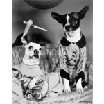 Two dogs sitting on a couch with a dog attaching them from behind with a knife 64238