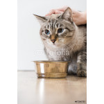 Portrait of a purebred striped cat pet and cat food on a gray ba 64238
