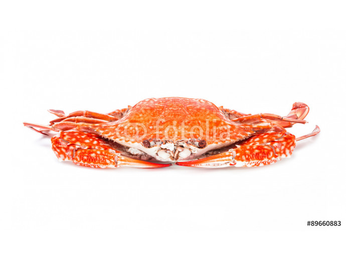 crab steamed seafood isolated on white background 64238