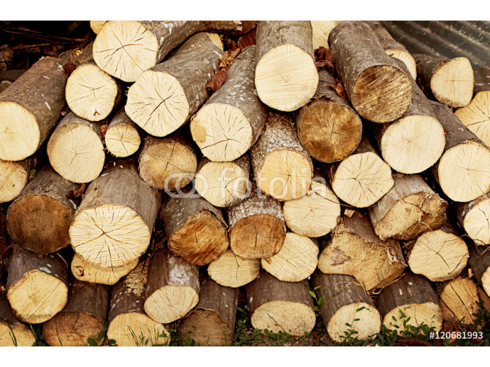 Pile of cut tree logs wood texture background. Tree trunks. Firewood stack for the background 64238