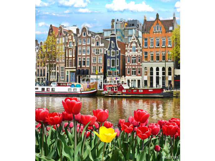 Beautiful landscape with tulips and houses in Amsterdam, Holland 64238