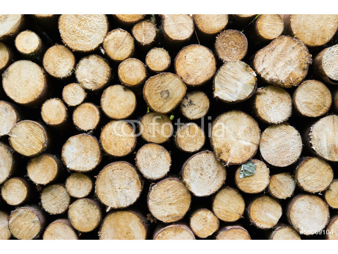 Pile of wood logs ready for winter 64238