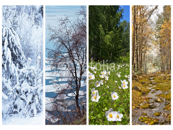 Nature and forest in winter, spring, summer and fall. Collage 64238