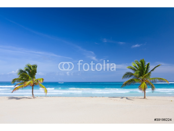 Two palm trees on the tropical beach, Dominican Republic 64238