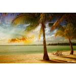 Beautiful marine landscape with tree on a pristine beach 64238