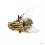 Fly isolated 64238