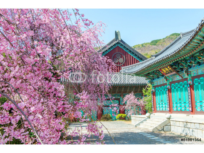 Fotomural decorativo Gyeongbokgung Palace with cherry blossom in spring,Korea 64238