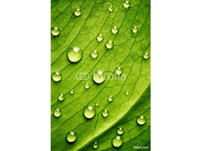 Green leaf with drops of water 64238
