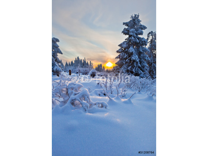 Photo wallpaper winter forest in Harz mountains, Germany 64238