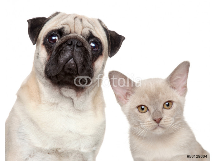 Dog and Cat 64238