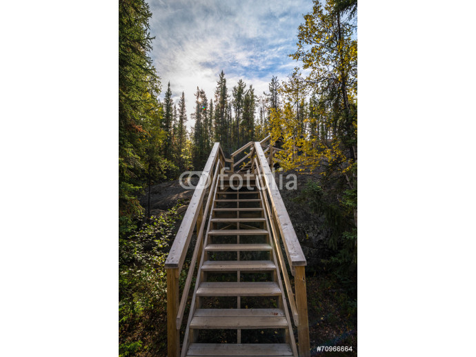 Canadian Forest Trail 2 64238