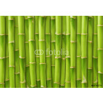 green bamboo background 64238