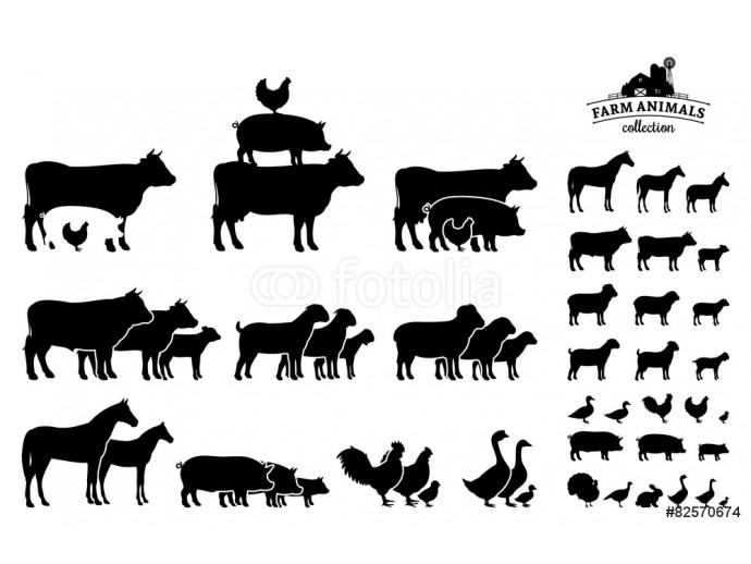 Vector Farm Animals Collection Isolated on White 64238