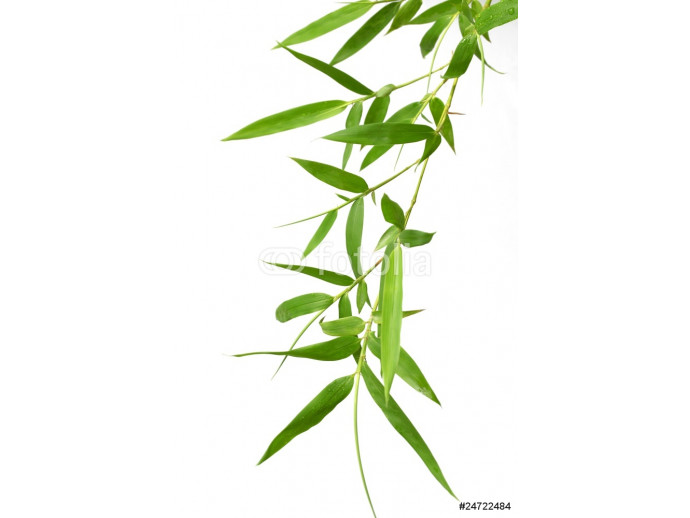 Bamboo leaves 64238