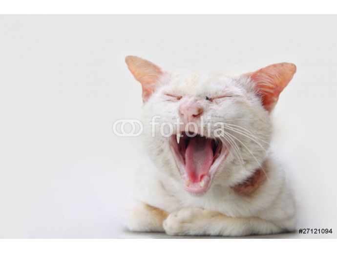 Wallpaper Yawning cat 64238