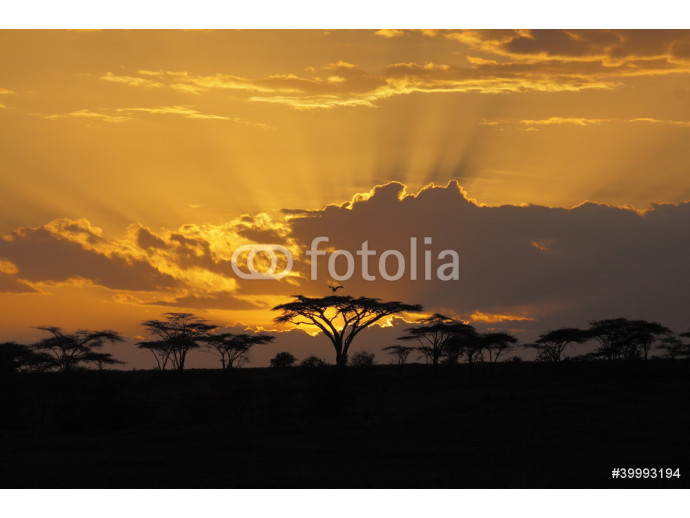 Sunset in Africa with bird perching in 64238