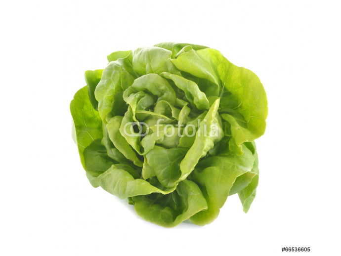 fresh butter head lettuce isolated on white background 64238