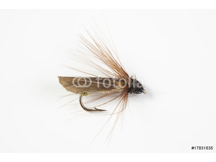 Fishing Fly 64238