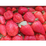 Directly above shot of fresh strawberries for sale 64238
