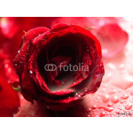 rose flower with smoke 64238