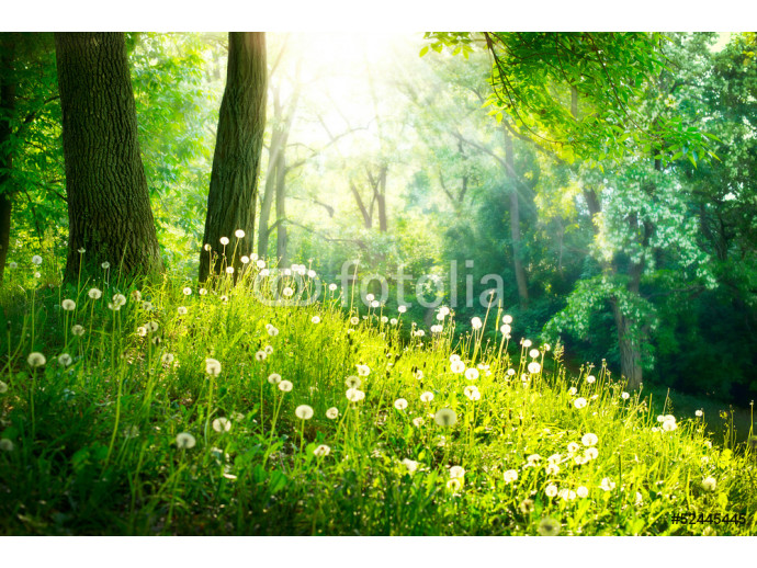 Spring Nature. Beautiful Landscape. Green Grass and Trees 64238