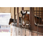 Horse in a stall 64238