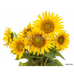bunch of sunflowers isolated 64238